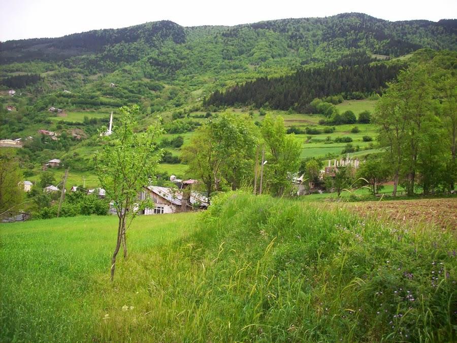 Araköy / Gümüşhane yeşillik