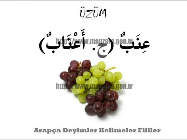 Arapça Üzüm
