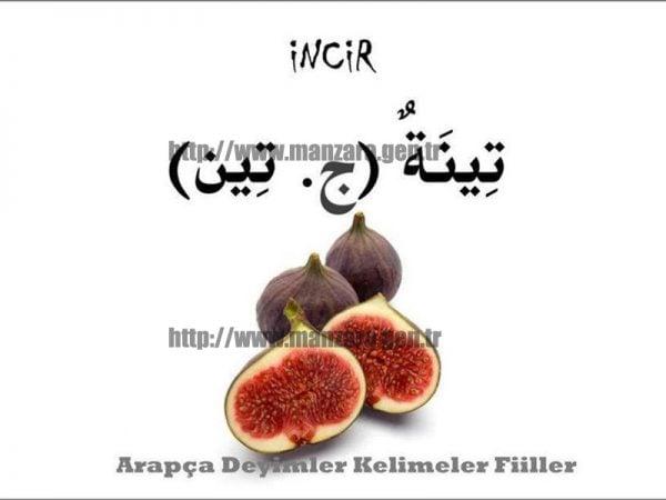 Arapça incir yazısı ve resmi