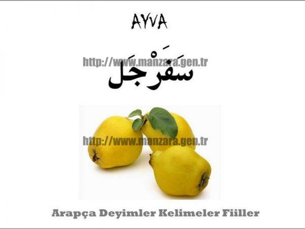 Arapça ayva yazısı ve resmi