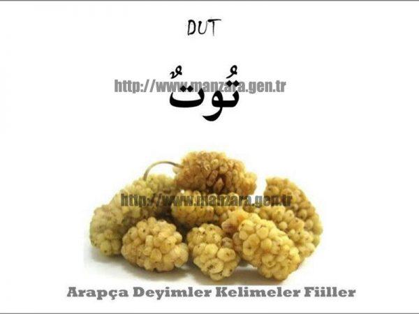 Arapça dut yazısı ve resmi