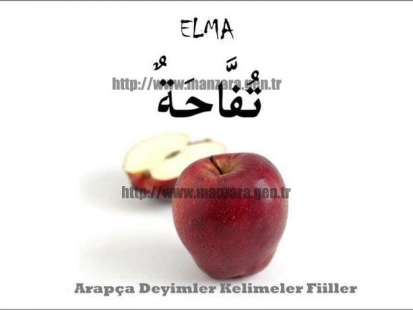 Arapça elma yazısı ve resmi