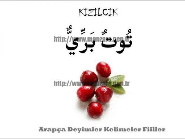 Arapça kızılcık yazısı ve resmi