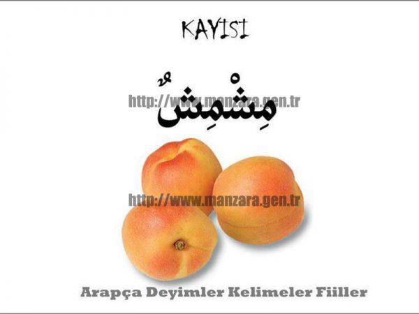 Arapça kayısı yazısı ve resmi