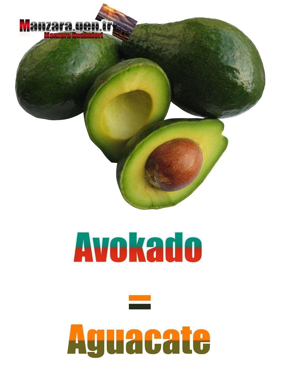 Avokado İspanyolcası (Aguacate)