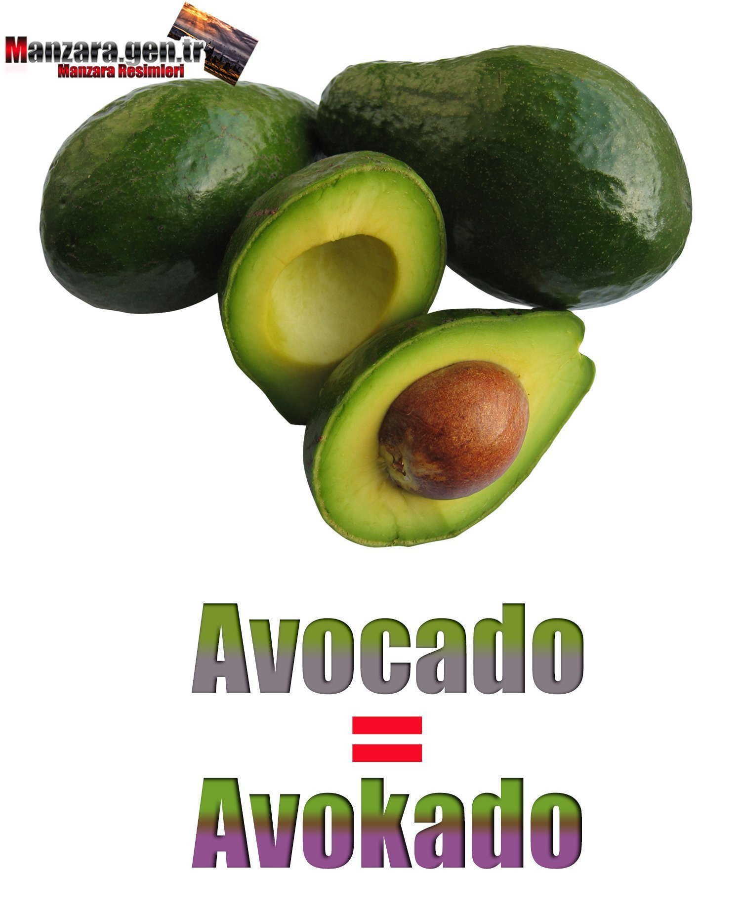 Avokadonun İngilizcesi (Avocado)