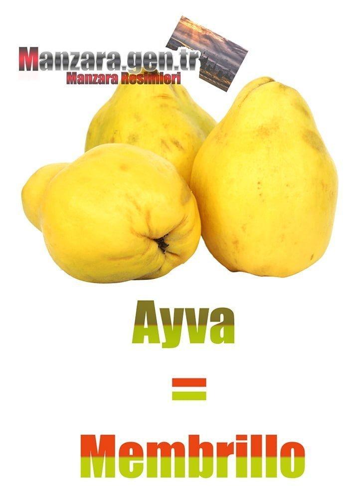 İspanyolca Meyve İsimleri - Ayva İspanyolcası (Membrillo)