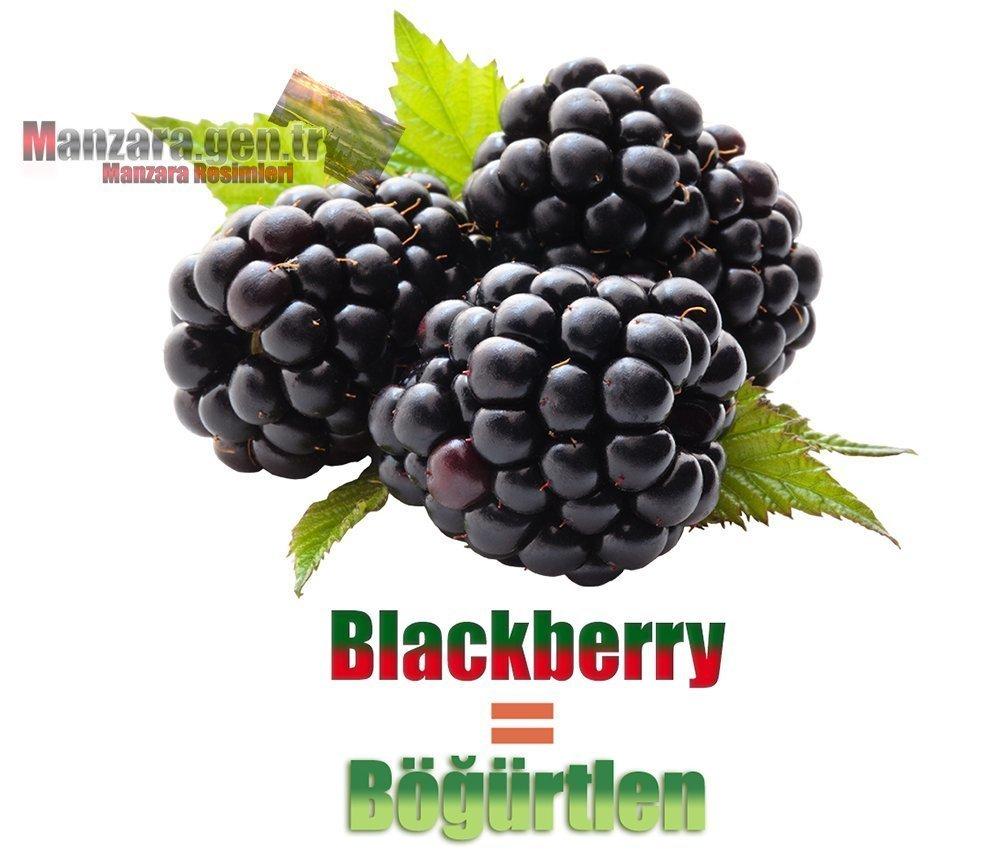 Böğürtlenin İngilizcesi (Blackberry)