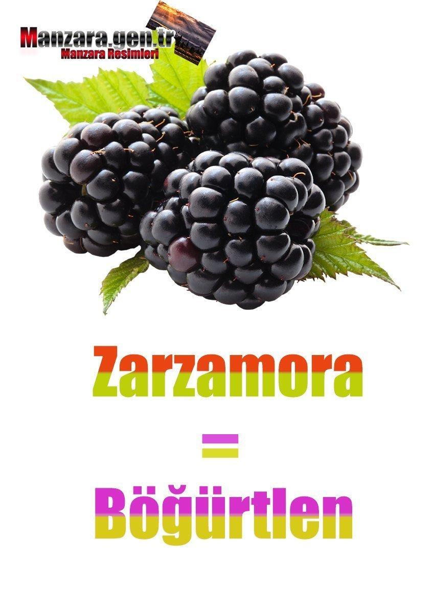 Böğürtlenin İspanyolcası (Zarzamora)