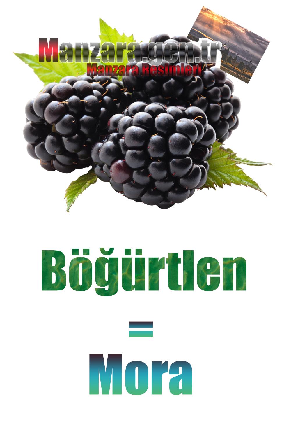 Böğürtlenin İtalyancası Nedir ? Böğürtlen İtalyanca Nasıl Yazılır ? Che cos'è il turco in Blackberry? Come scrivere Blackberry in turco?