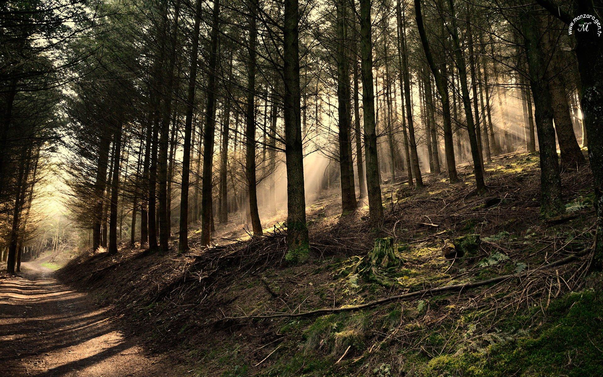 Belçika Ormanları