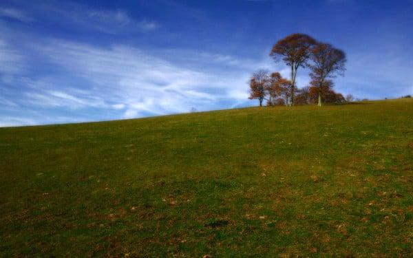 Bordo ağaç