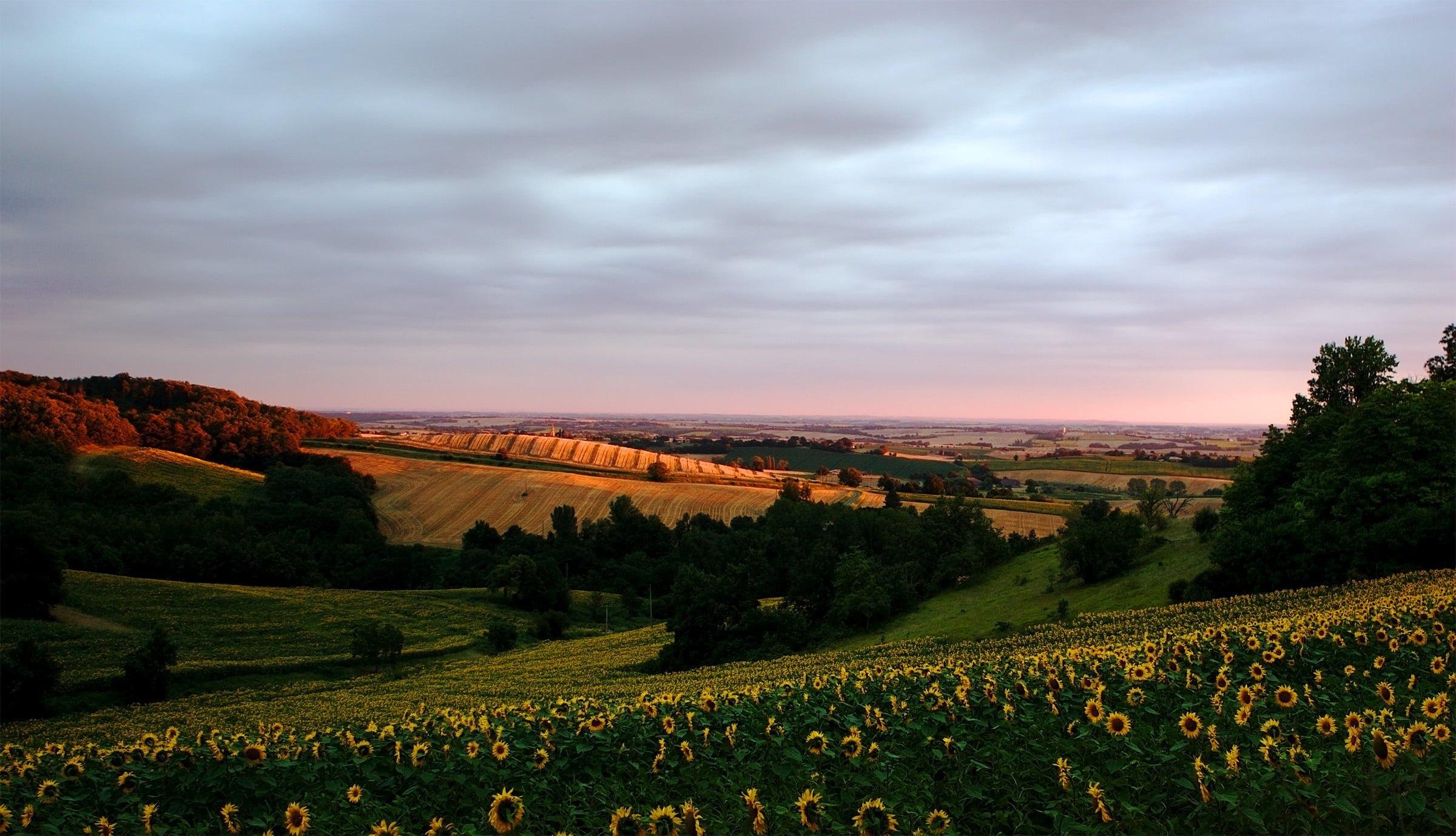 Brignemont-Fransa