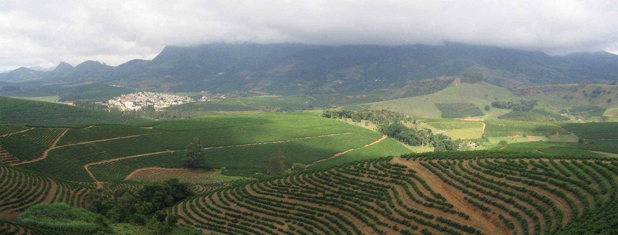 Brezilya'daki kahve bahçeleri