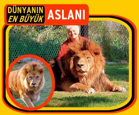 En büyük aslan