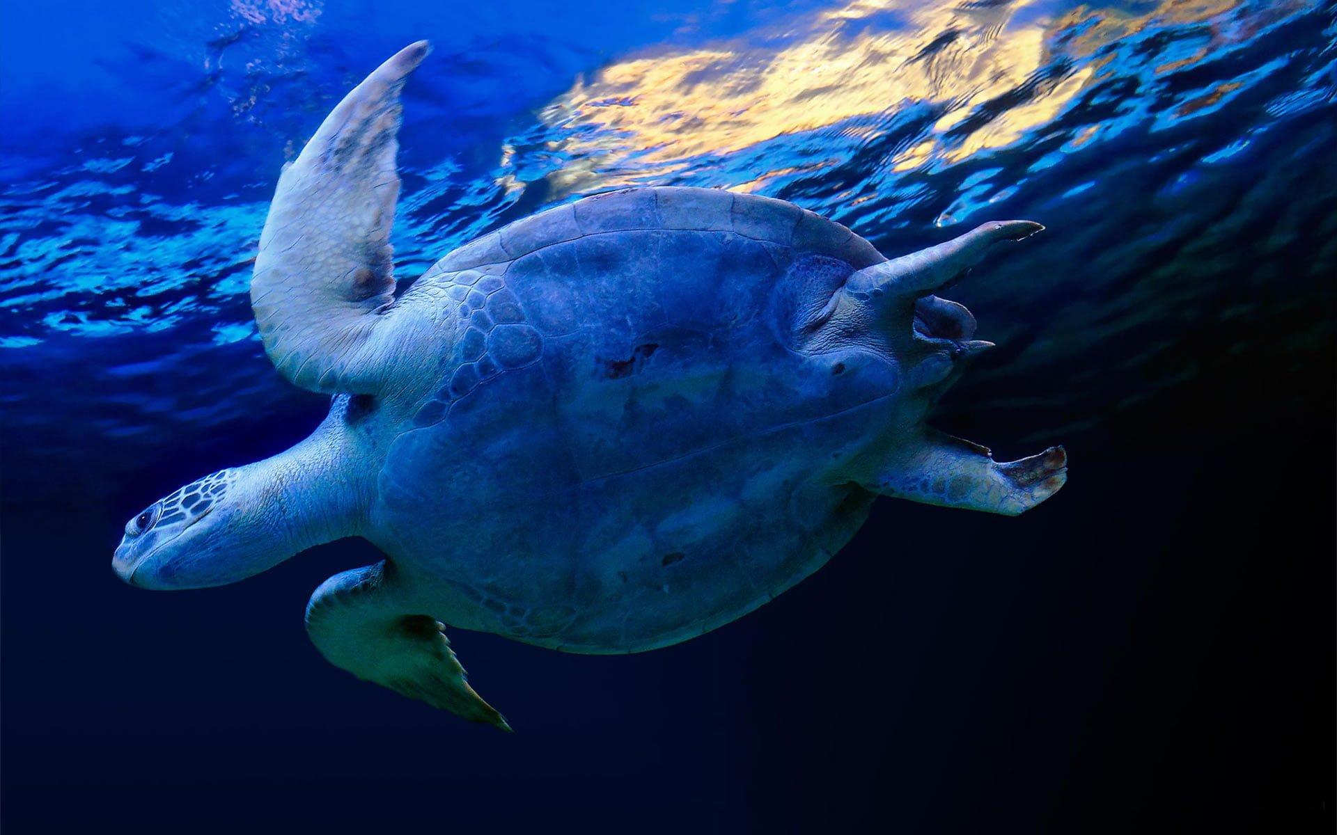 Deniz Kaplumbağası – 3