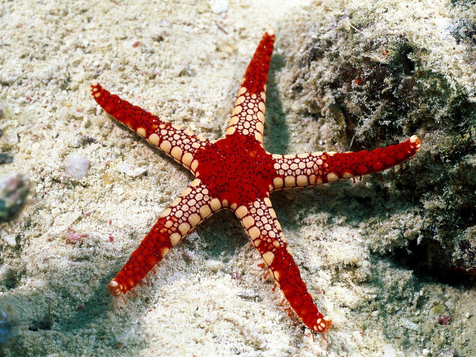 Deniz Yıldızı Resimleri