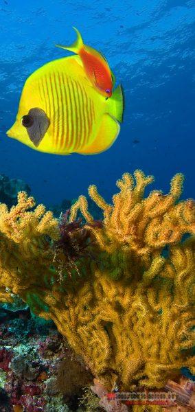 Denizler Altında Hayat Note 10 için