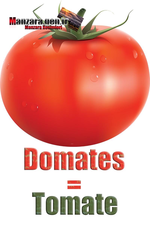 Domatesin Fransızcası Nedir ? Domates Fransızca Nasıl Yazılır ? Quel est le turc de tomate ? Comment écrire la tomate en turc?
