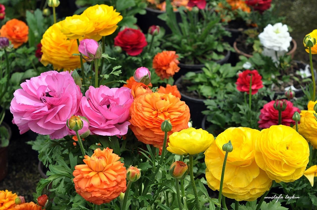 Enfes çiçekler