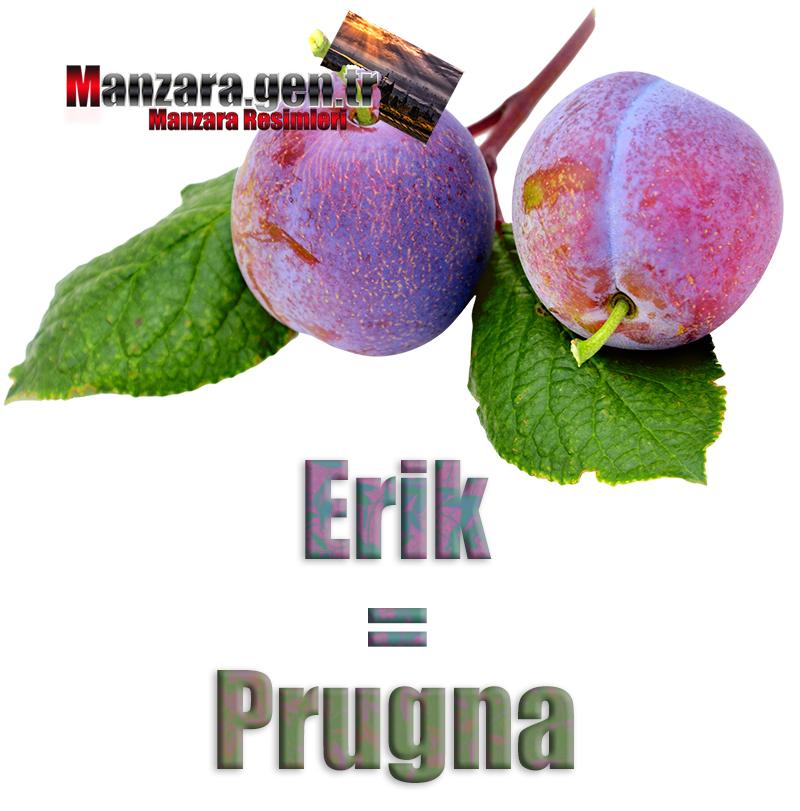 Eriğin İtalyancası Nedir ? Erik İtalyanca Nasıl Yazılır ? Che cos'è il turco in prugna? Come scrivere prugna in turco?