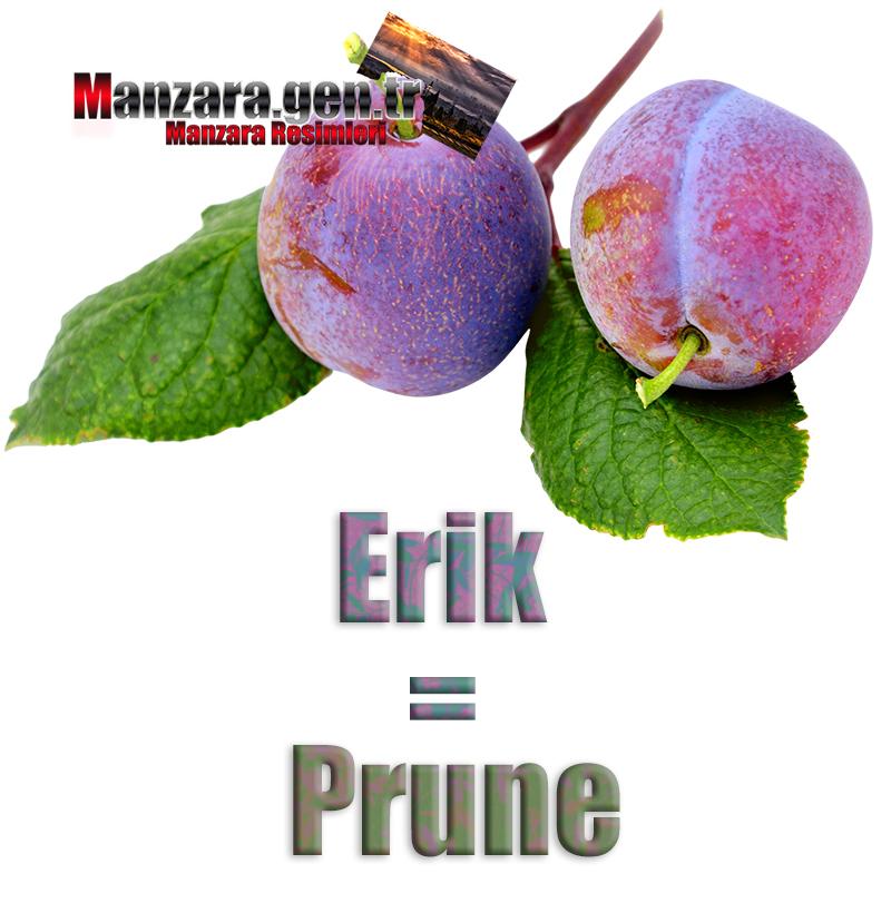 Eriğin Fransızcası Nedir ? Erik Fransızca Nasıl Yazılır ? Quel est le turc de prune ? Comment écrire la prune en turc?