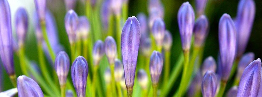 Facebook Çiçek Kapakları