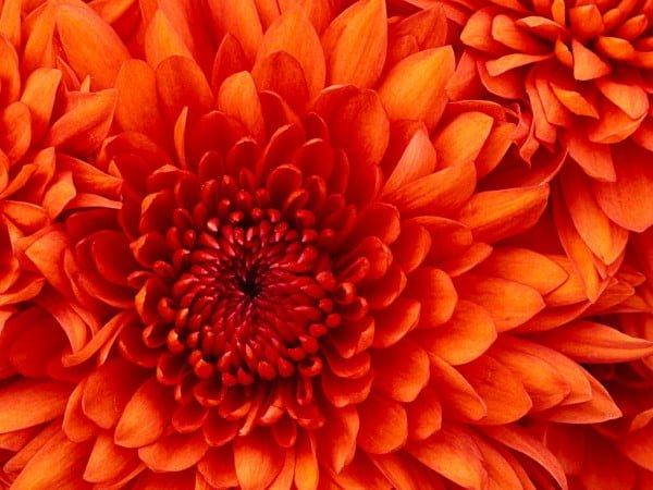 Farklı çiçek