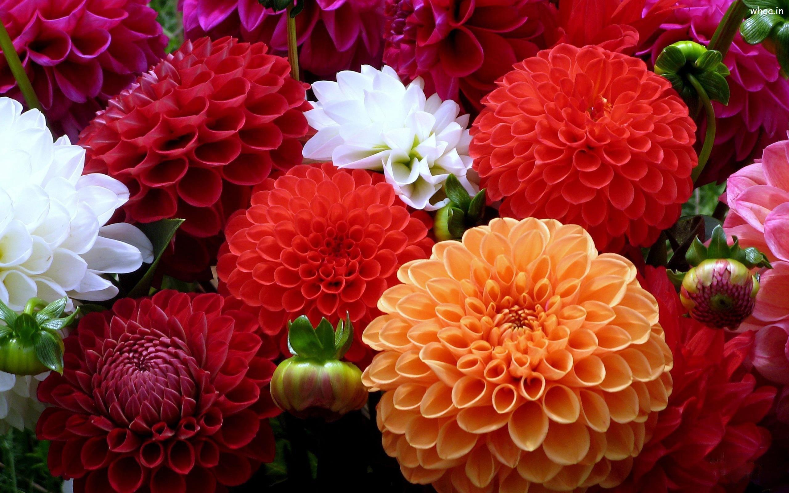 Farklı çiçekler