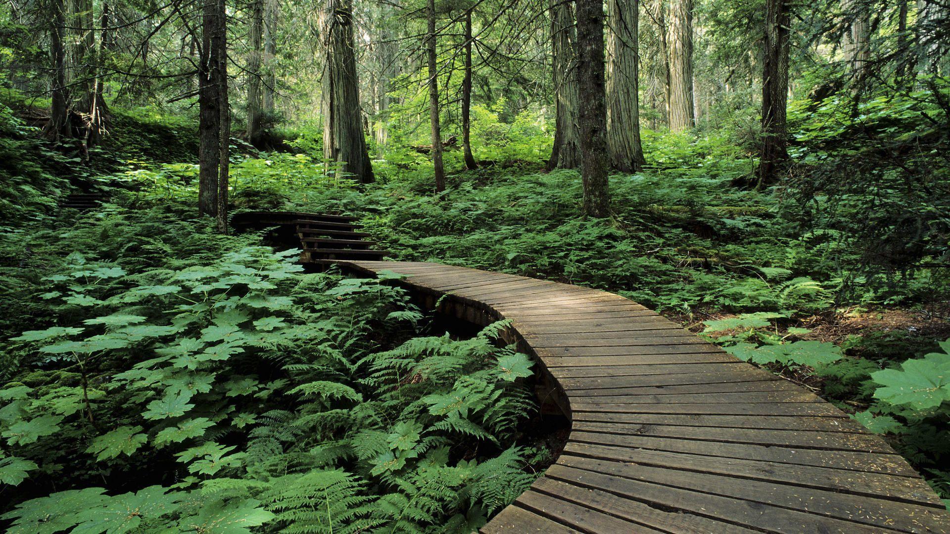 Mount Kanada Milli Parkı Revelstoke