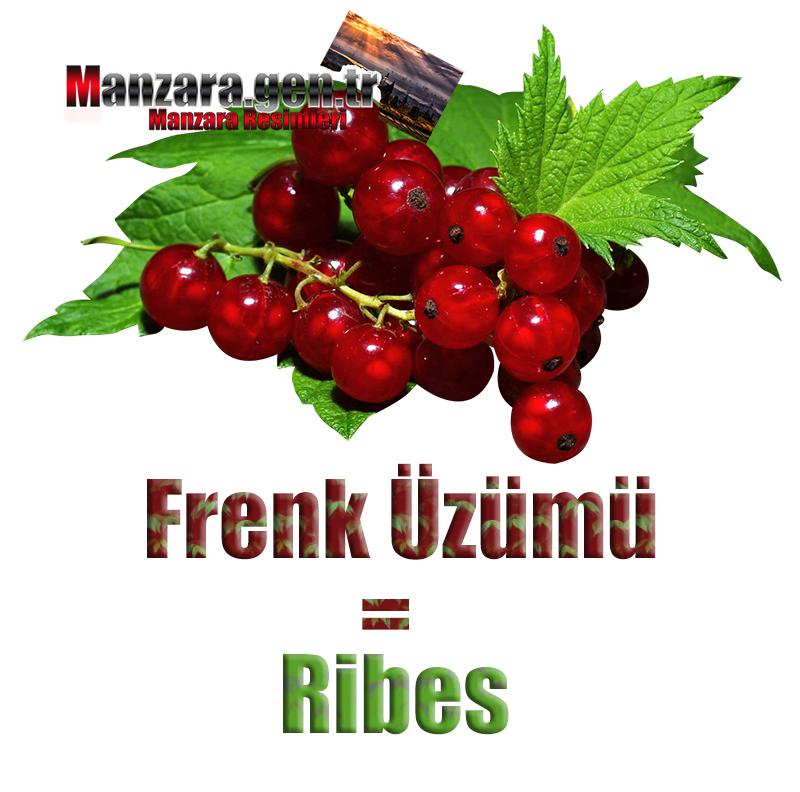 Frenk Üzümünün İtalyancası Nedir ? Frenk Üzümü İtalyanca Nasıl Yazılır ? Che cos'è il turco in ribes? Come scrivere ribes in turco?