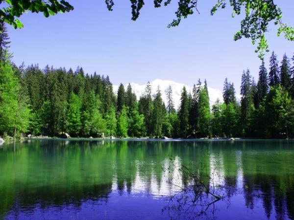 Göl ve orman