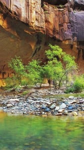 Gölet Manzarası iPhone 6 Plus