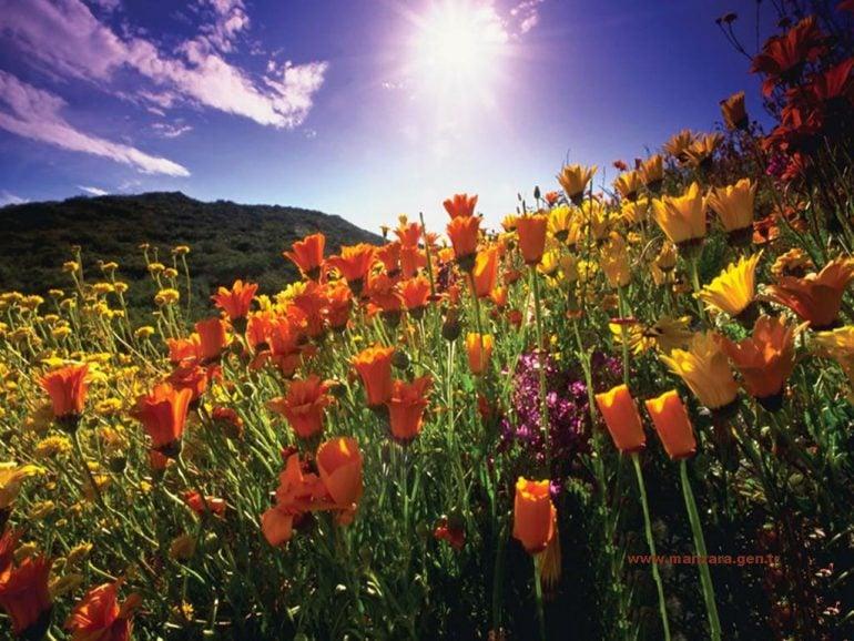 Gün Batımlı Çiçekler