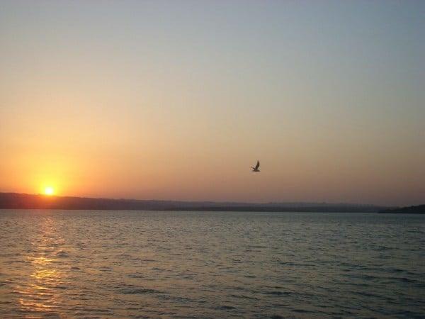 Gün batımı ve kuş