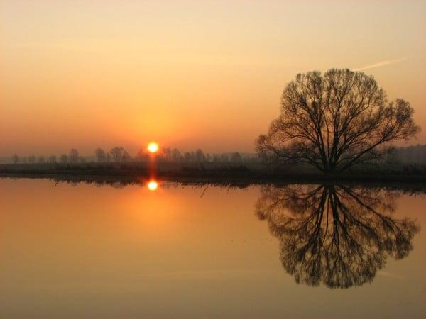 Güneş Ağaç ve Su