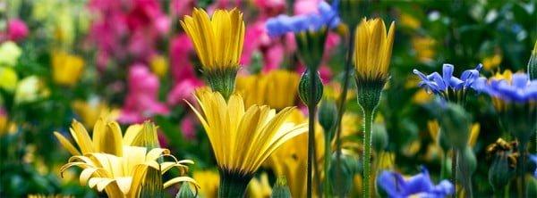 Güzel Çiçekli Facebook Kapakları