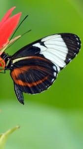 Güzel Kelebek 1080x1920