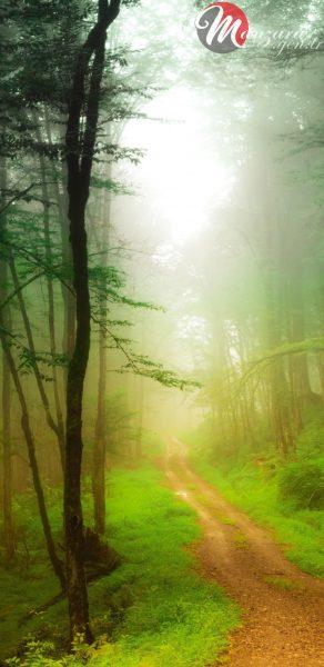 Güzel Orman Manzarası Note 9