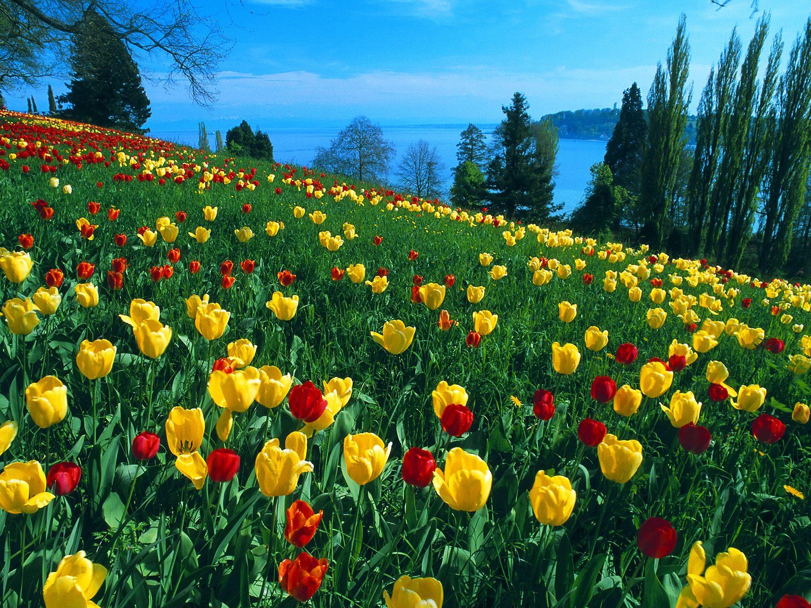 Galatasaray Çiçek Bahçesi