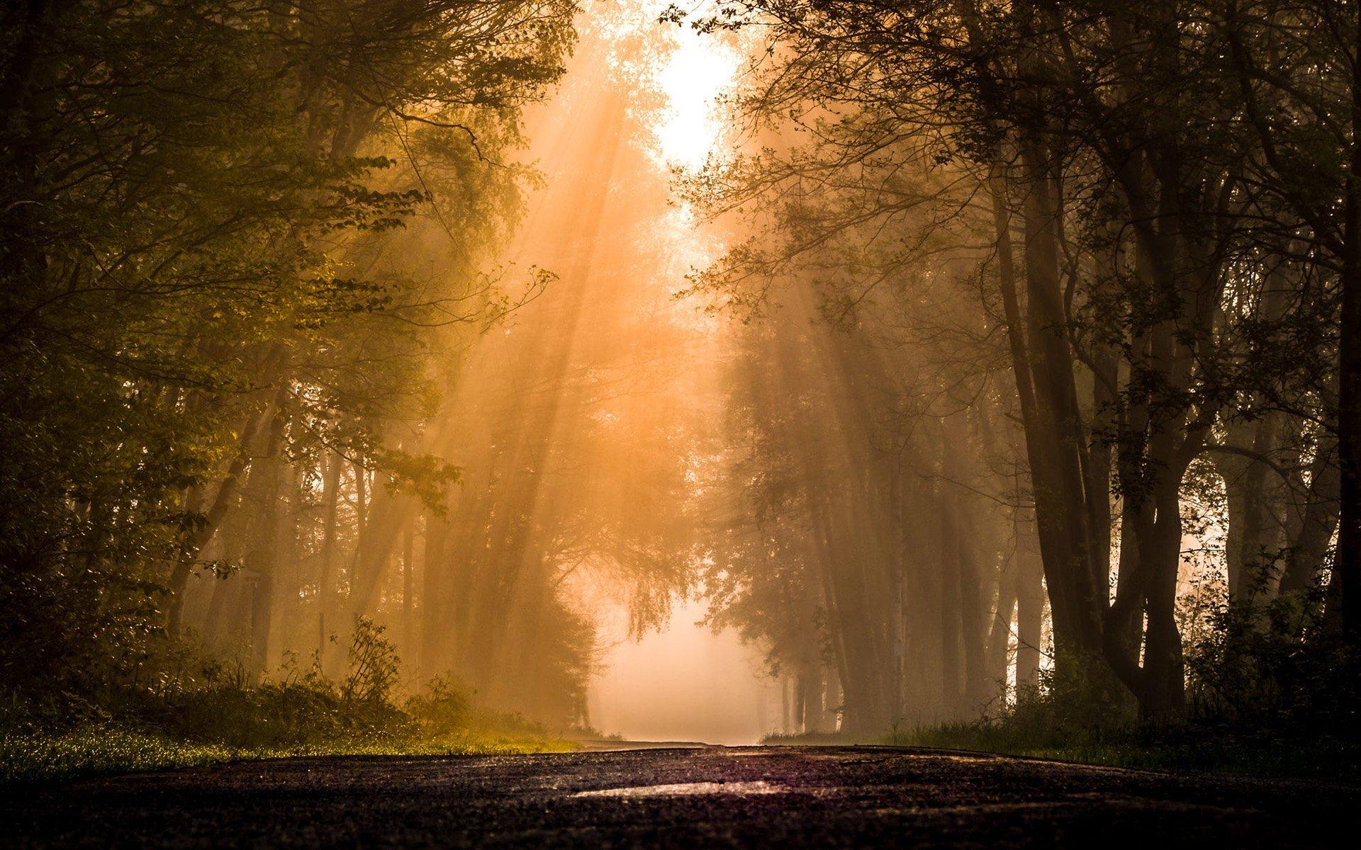 Hüzmeli Orman