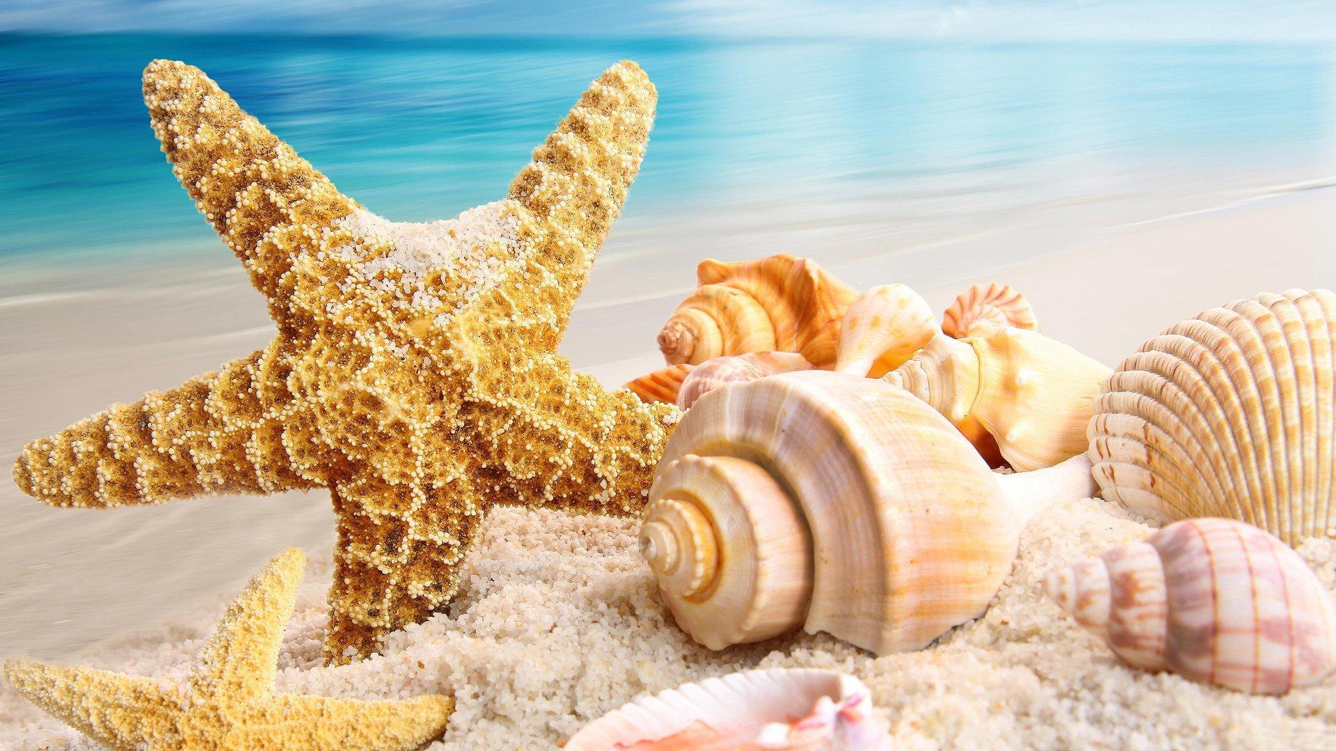 HD Deniz Yıldızı
