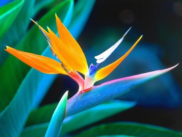 Harika çiçek arka planı