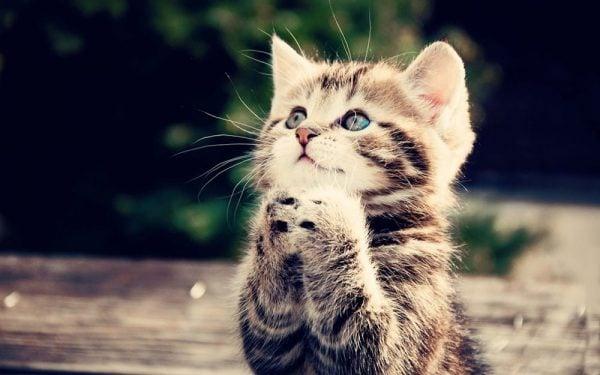 Harika Şirin Kedi