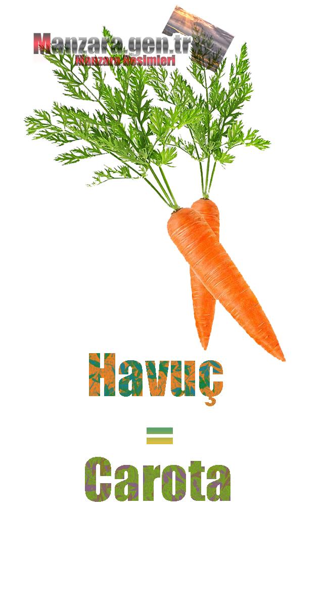Havucun İtalyancası Nedir ? Havuç İtalyanca Nasıl Yazılır ? Che cos'è il turco in carota? Come scrivere carota in turco?