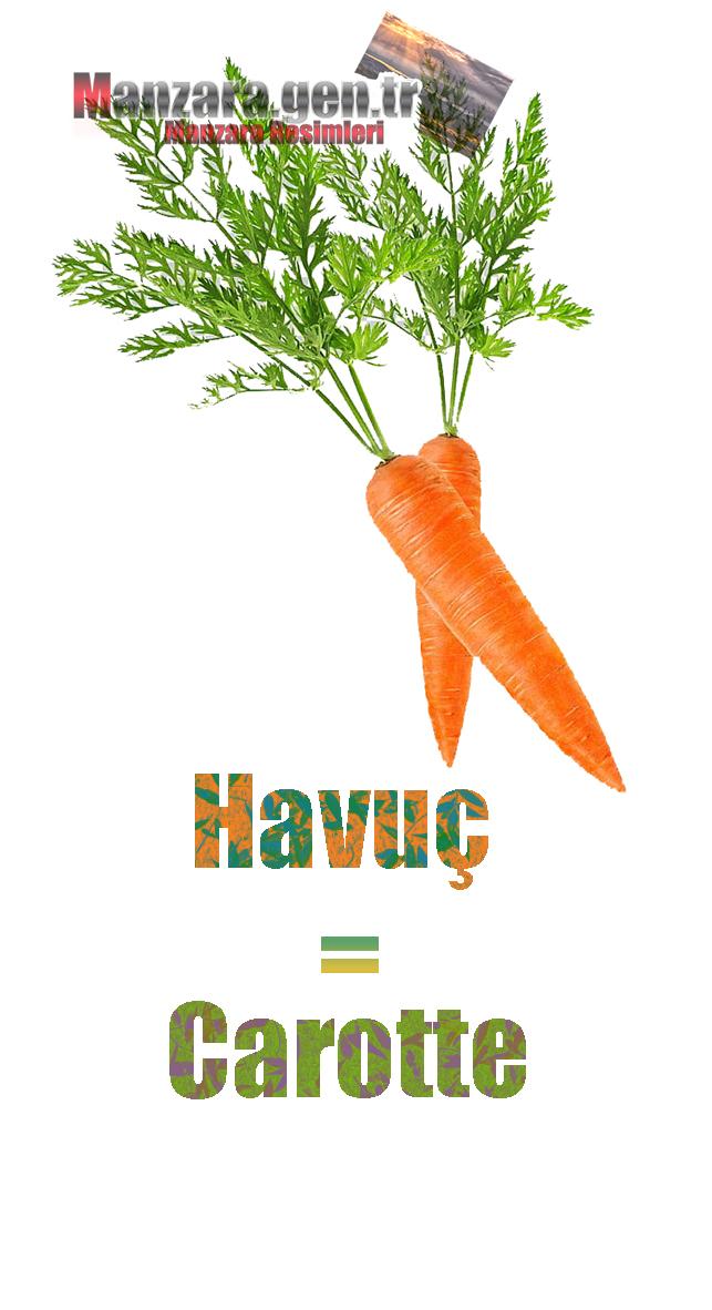 Havucun Fransızcası Nedir ? Havuç Fransızca Nasıl Yazılır ? Quel est le turc de carotte ? Comment écrire la carotte en turc?