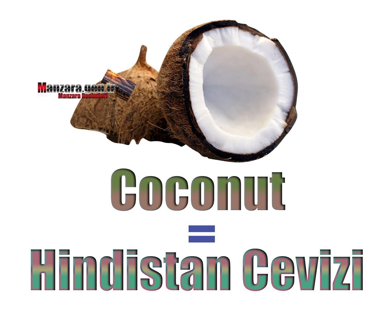 Hindistan Cevizi İngilizcesi (Coconut)