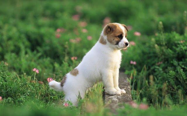 Küçük sevimli köpek