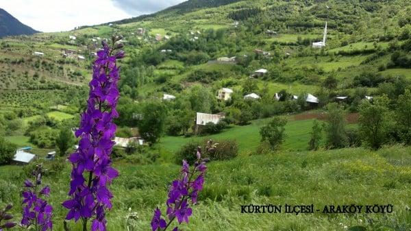 Kürtün İlçesi - Araköy Köyü