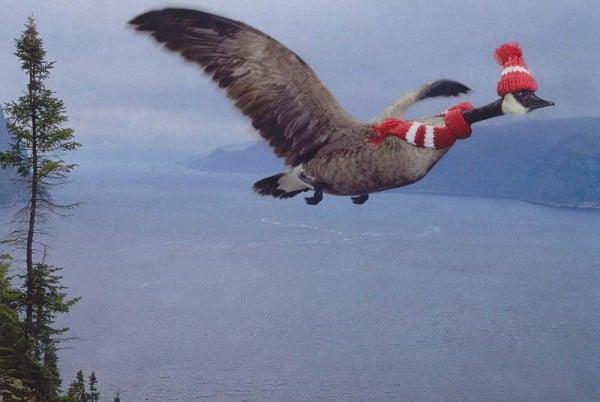 Kışlıklı kuş